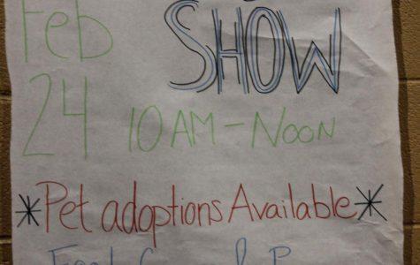 Daschund into Verrado's Second Annual Dog Show