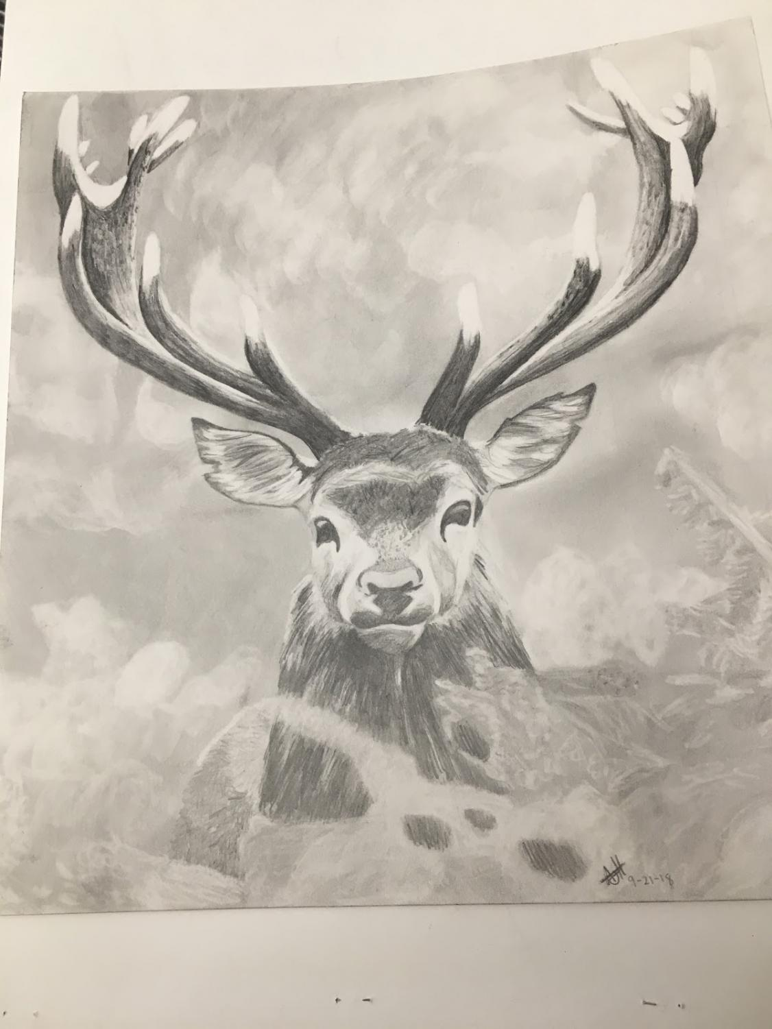 A pencil illustration of a deer drawn by VHS student Amanda Heimbuck.