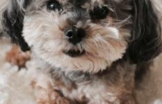 Pet Adoptions Soar